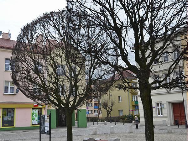 drzewa koło ratusza Oleśnica