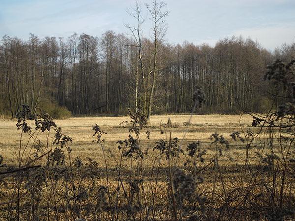 widok pól w Polsce